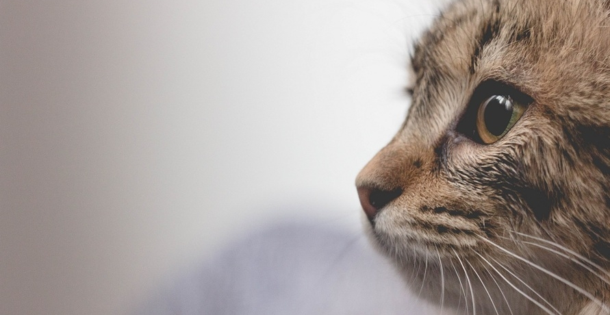 Neu bei Yarrah: Filets für Katzen im Portionsbeutel