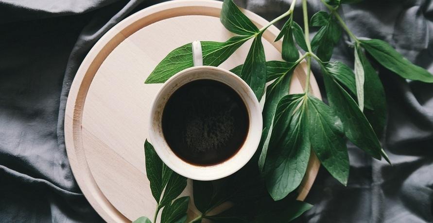 Gesunde Kaffeealternative aus Guayusa-Blättern