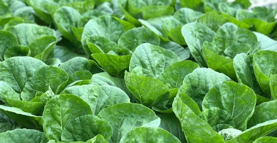 Lecker und gesund - der Gemüsegarten von BEHR