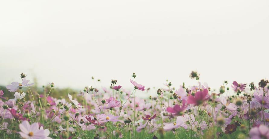 Nachhaltige Blumenerde - torffreie Erde zum Schutz der Natur