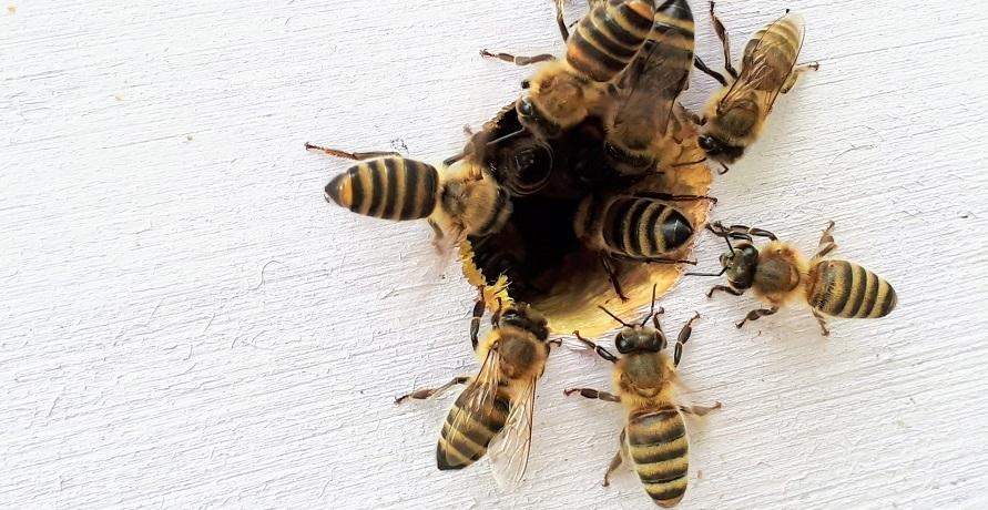 Mission Bee: Bienen retten, ökologische Artenvielfalt erhalten