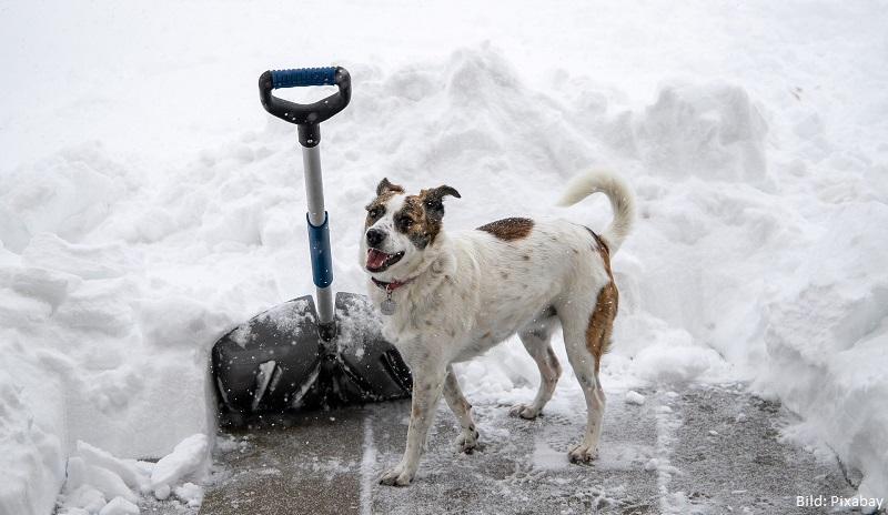 Hund und Schnee schnippen