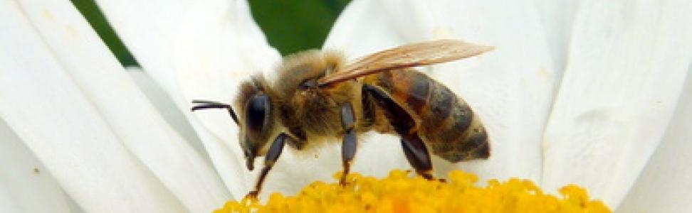 Keine Angst vor Wespenstichen!