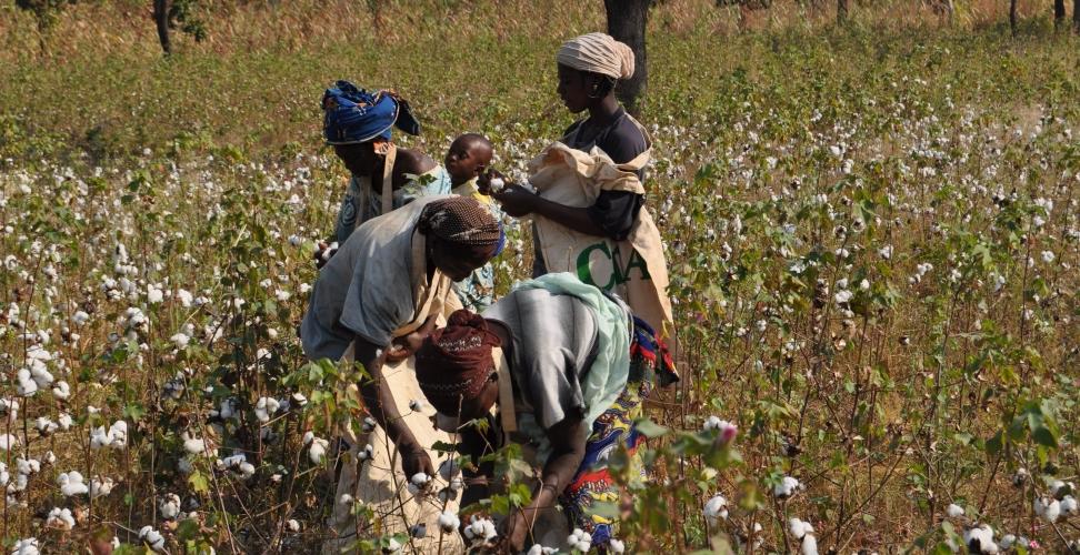 Baumwollinitiative weitet Aktivitäten in Südostafrika aus