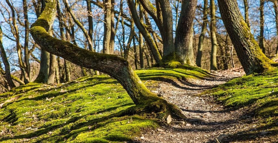 Nachhaltigkeit, Fitness und Spaß verbinden – Fahrradtouren in der Eifel